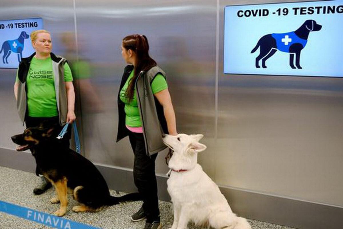 Είναι τα σκυλιά η λύση για ασφάλεια στα ταξίδια την εποχή της πανδημίας;